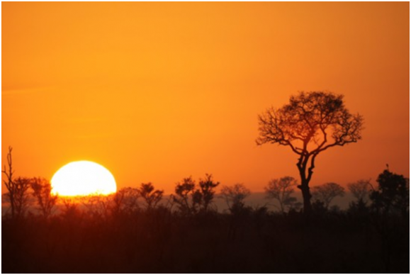 Sunset at Kruger National Park  (Creative Commons)