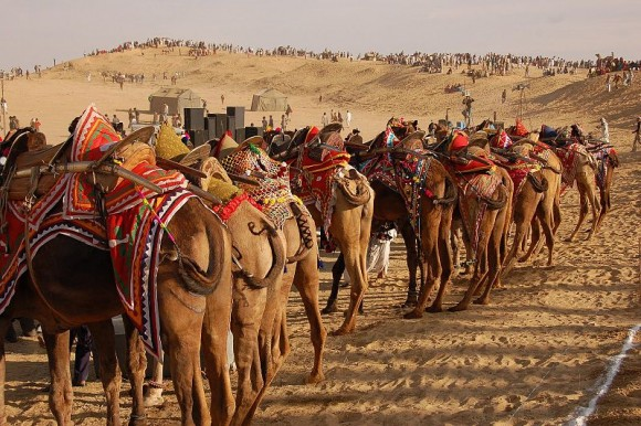 Bikaner_Camel_Fair,_by_rajkumar1220