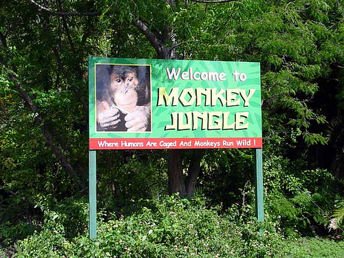 Monkey-Jungle-Attraction-Miami